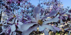 La détox de printemps